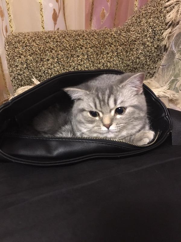 Молли в сумке