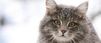 як дізнатися вік кішки