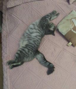 кошка молли