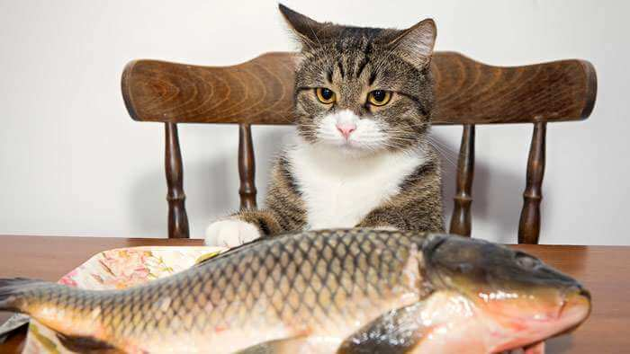 чому не можна давати рибу коту