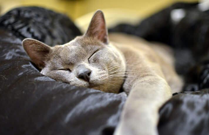 сколько живут кошки