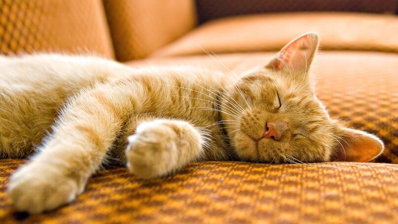 чому коти люблять валер'янку