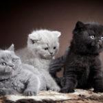 всі породи кішок