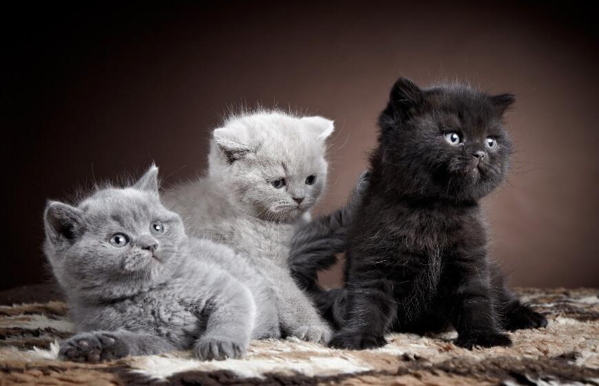 Все породы кошек - название, фото, описание, происхождения