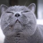 імена для кішок