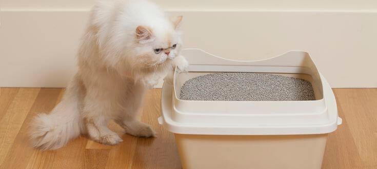 как приучить кота взрослого к лотку