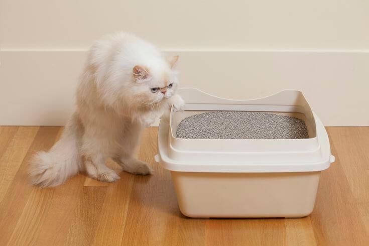 як привчити кота дорослого до лотка