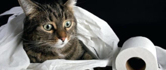 Як привчити кота до унітазу
