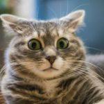 клички для котів