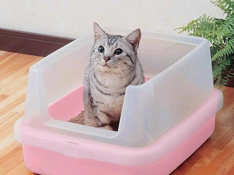 привчання кішки до лотка