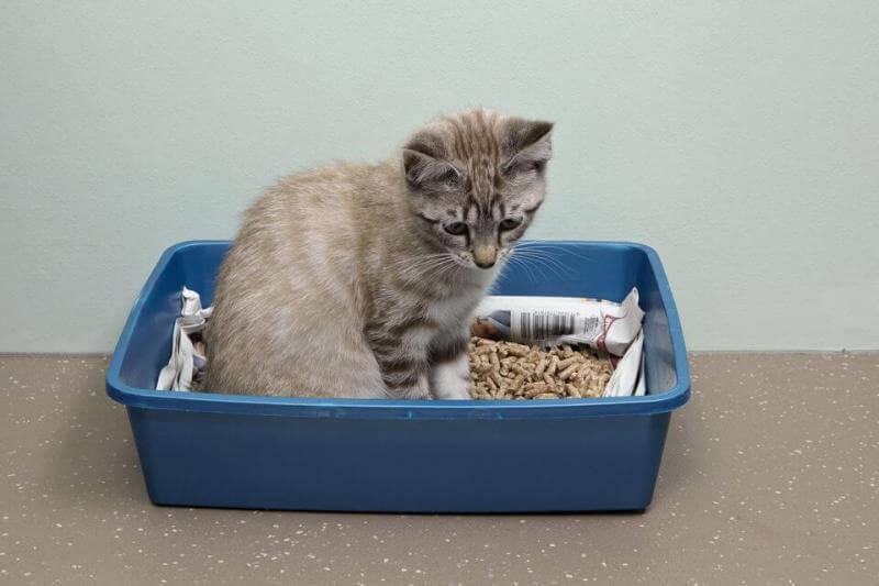 открытый лоток для кошек
