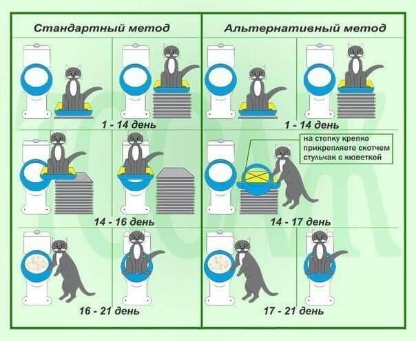 этапы приучения кота к унитазу