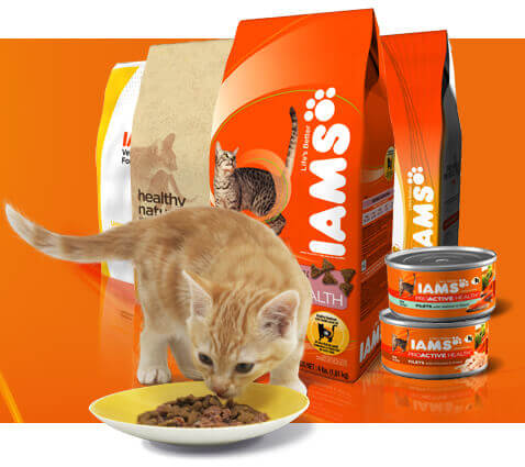 Iams корм для котов