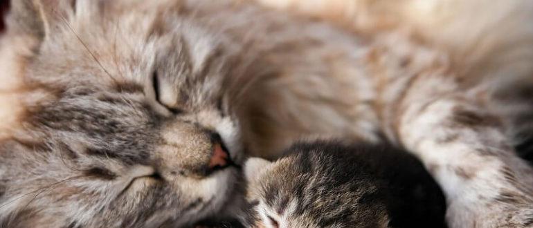 коли кошенята починають бачити
