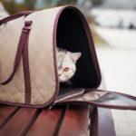 переноска для кішок