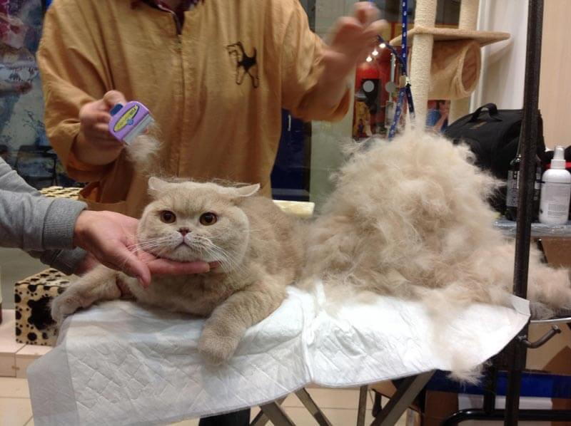 Фурминатор для кішок