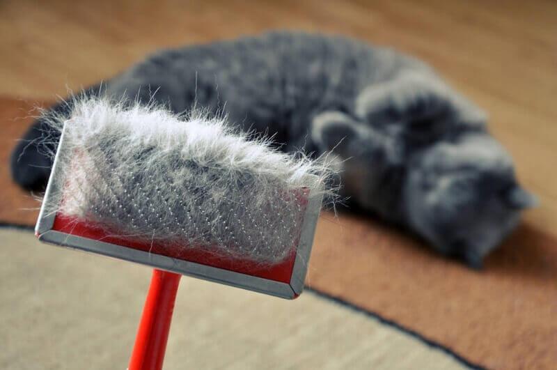 профилактика от перхоти у кошек