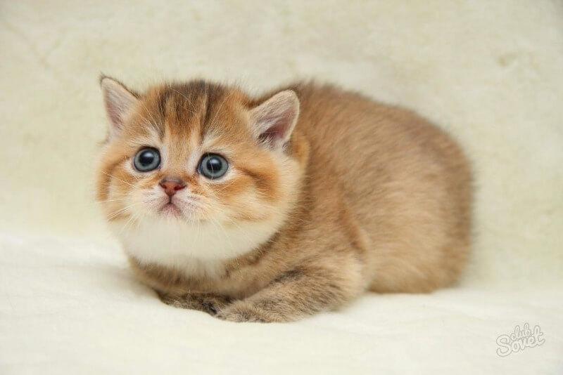як визначити стать кошеня