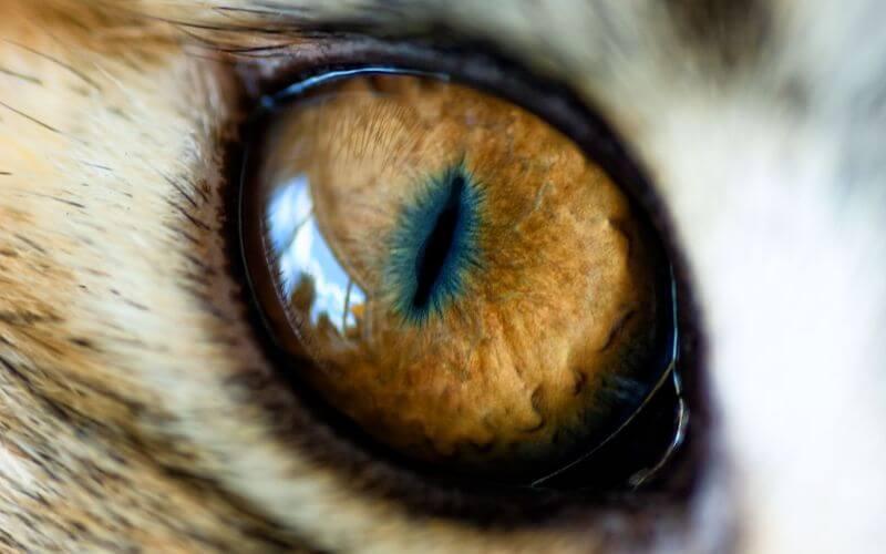 особенности кошачьего глаза