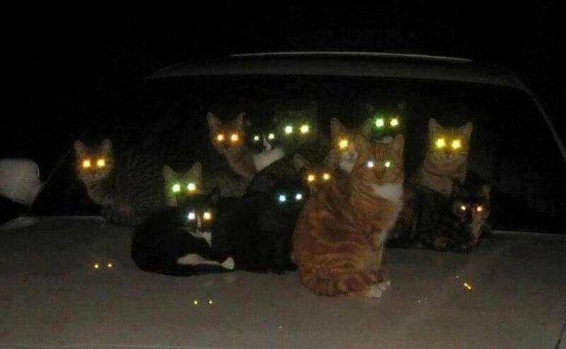 почему у котов святятся глаза