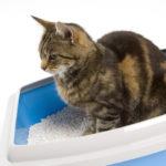 наповнювачі для котячого туалету