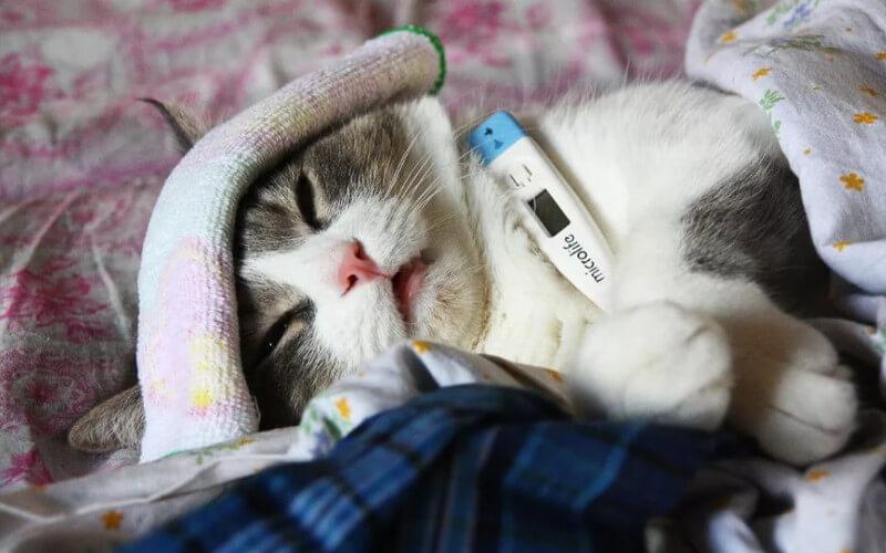 захворювання у котів