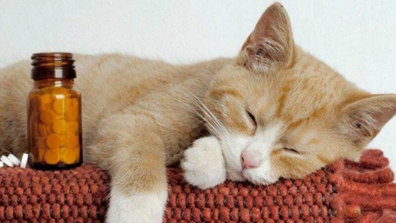 как дать котенку лекарство