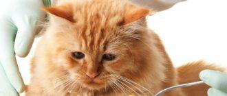 как дать коту таблетку
