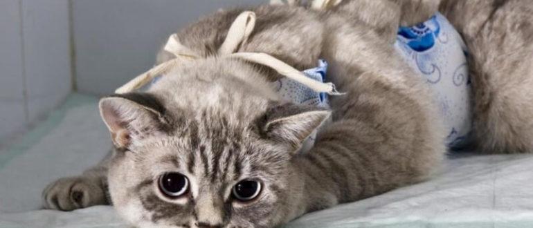 як годувати кішку після стерилізації