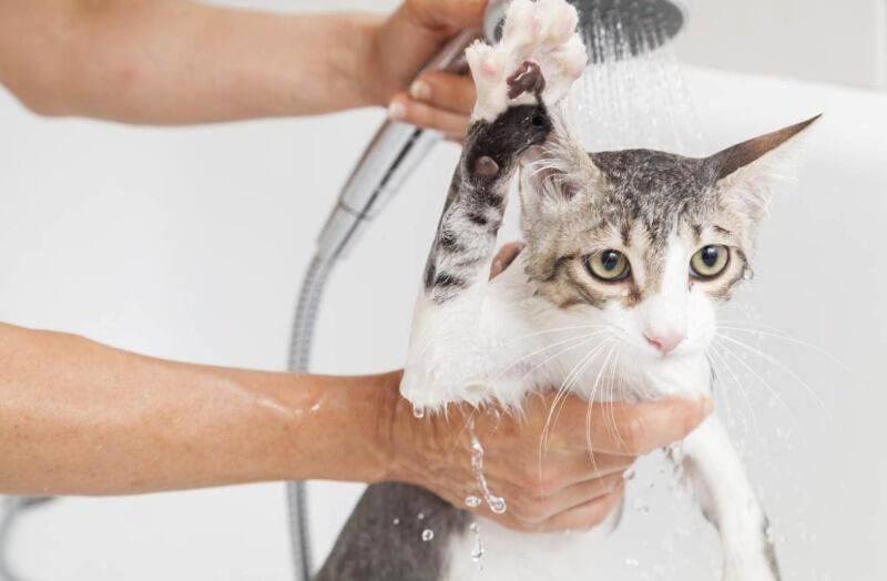 навіщо купати кішку