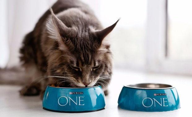 Огляд корми для кішок Пуріна Ван
