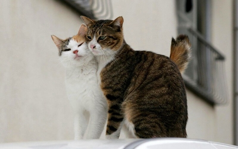 в'язка з котом