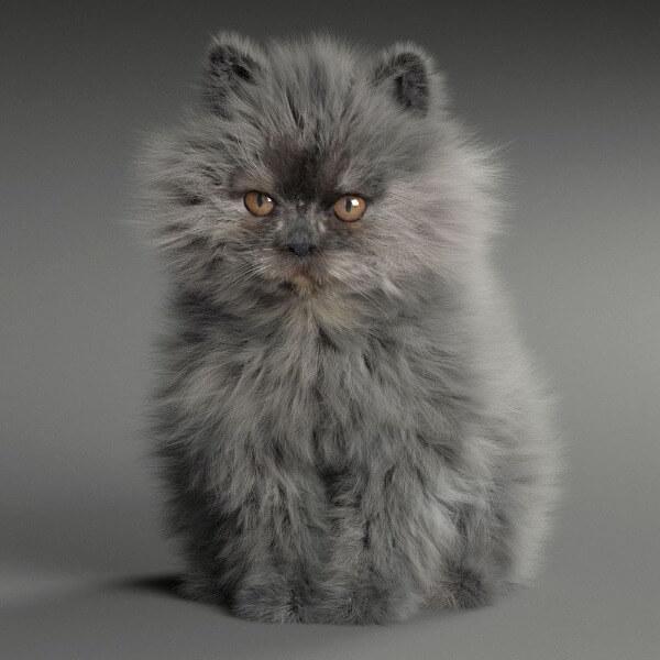 перс котенок дымчатый окрас