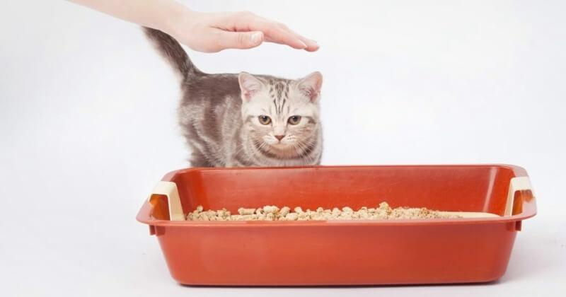 гладить кошку чтобы не гадила
