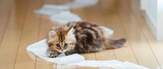 як відучити кішку гадити