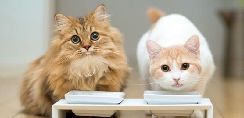 чим годувати кота