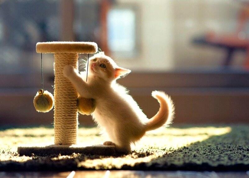 як привчити кота до кігтеточки