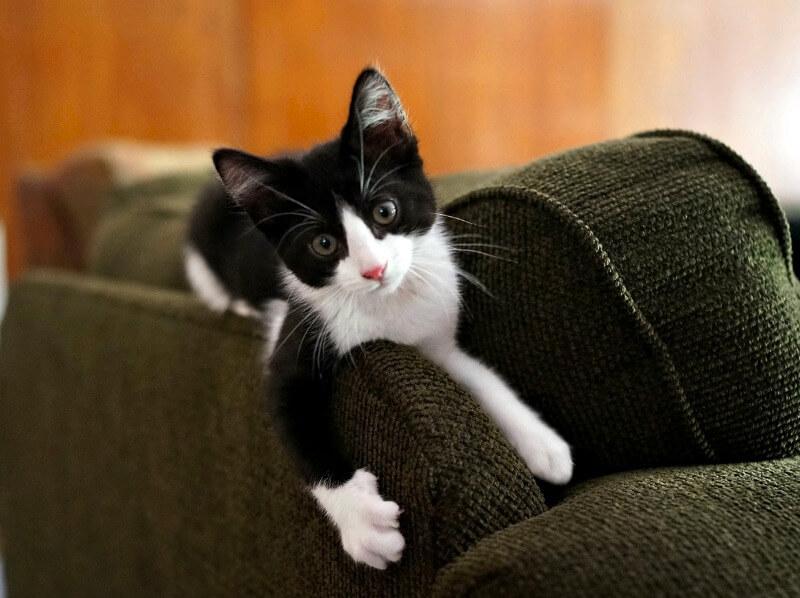кіт точить кігті