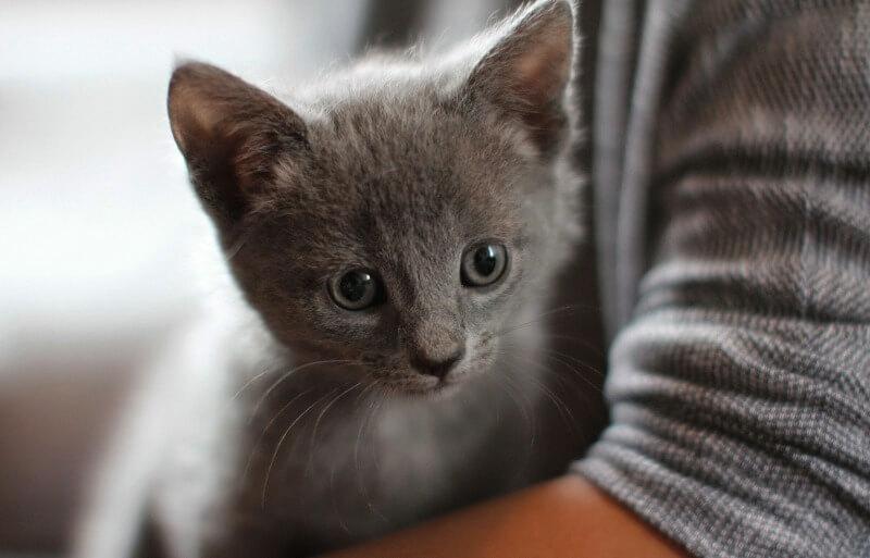 котенок нибелунг