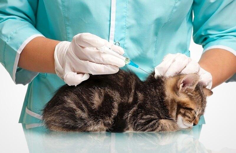 первая прививка котенку