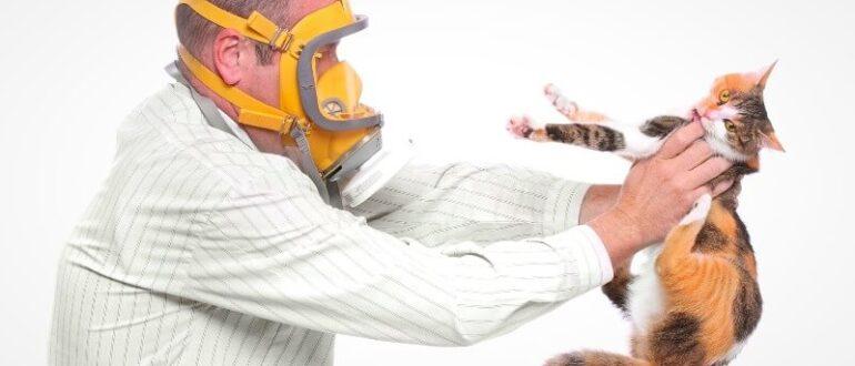 Гіпоалергенні породи котів