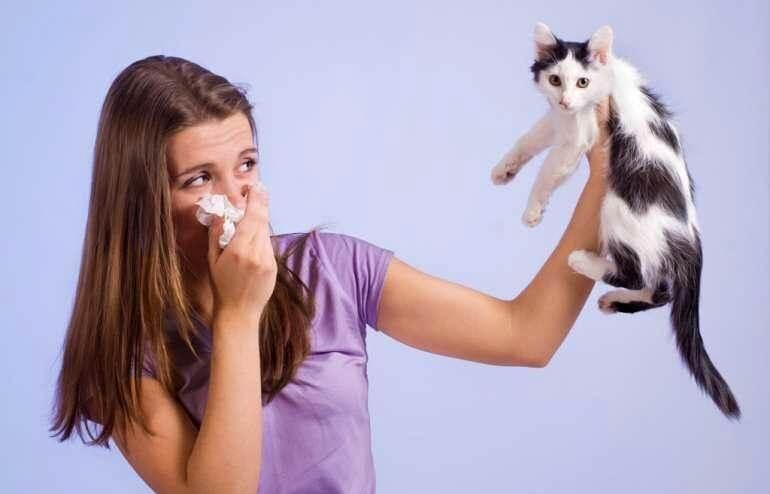 гіпоалергенні кішки
