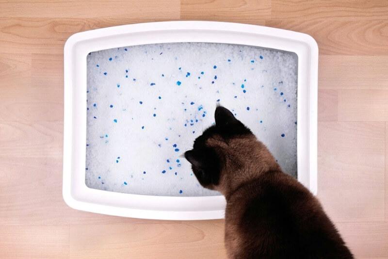 силикагелевый наполнитель для кошек