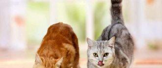 рейтинг влажных кормов для кошек