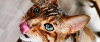 беззерновые корма для кошек